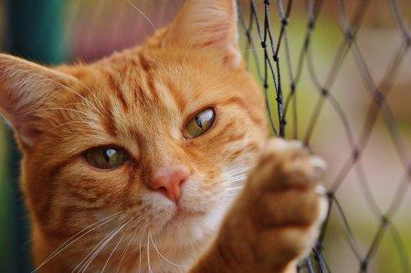 Лапки которые вас вылечат. Кошки при аллергии.