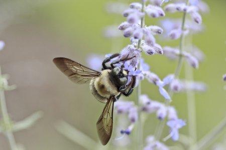 Аллергическая реакция на летающих жалящих насекомых